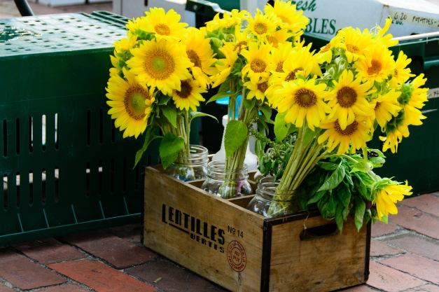 Sunflowers-0604